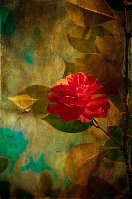 Camellia Photograph - The Lady Of The Camellias by Loriental Photography