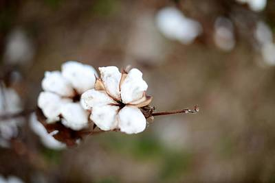 Art Print featuring the photograph The Land Of Cotton by Linda Mishler
