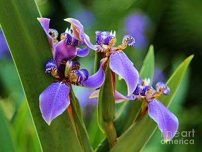 Flowers Photograph - The Land Of Fairies by Carol Groenen
