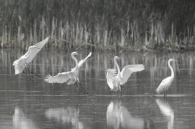 Photograph - The Landing by Eric Miller