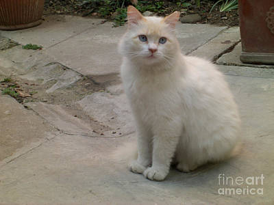 Photograph - The Landlady's Cat by Deborah Smolinske
