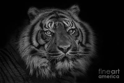 The Last Indonesian Art Print by Ashley Vincent