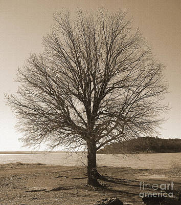 R. Mclellan Photograph - The Last Oak by R McLellan