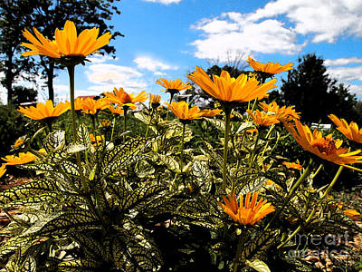 Photograph - The Last Of Summers Glory by Deborah Fay