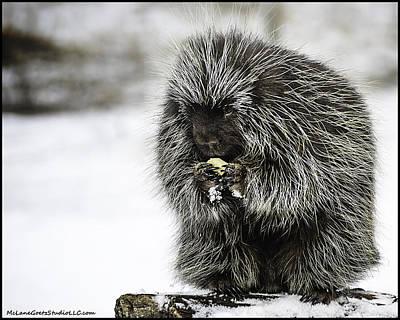 Snow Photograph - The Last Of The Porcupines Winter Stash by LeeAnn McLaneGoetz McLaneGoetzStudioLLCcom
