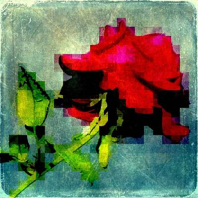 Photograph - The Last Rose Of Summer by Jodie Marie Anne Richardson Traugott          aka jm-ART