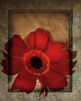 Gerbera Mixed Media - The Last Song by Georgiana Romanovna