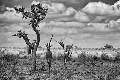 Kenya Photograph - The Last Unicorn by Marcel Rebro