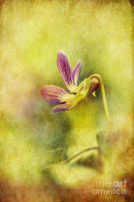 The Last Violet Art Print by Lois Bryan