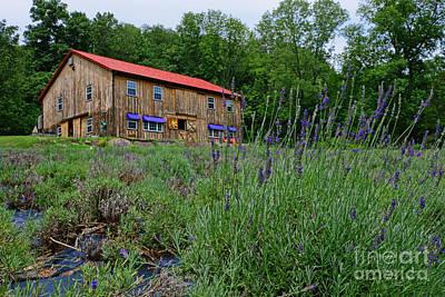 The Lavender Farm Print by Paul Ward