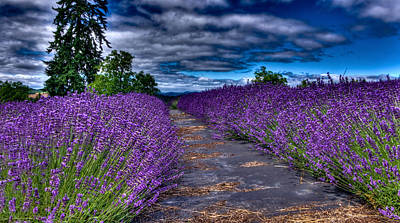 Print featuring the photograph The Lavender Field by Thom Zehrfeld