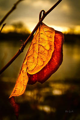 The Leaf Across The River Art Print