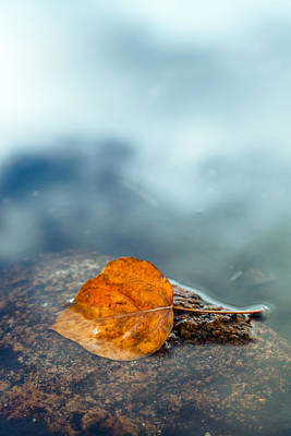 Photograph - The Leaf by Jonathan Nguyen
