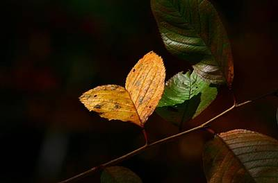 Nature Photograph - The Leaf Of Love by Lisa Vaccaro
