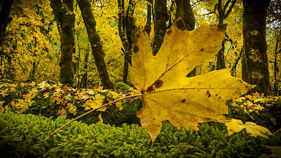Photograph - The Leaf S Point Of View by Jean Noren
