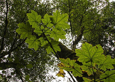 Photograph - The Leaves Above by Jean Noren