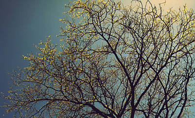 Photograph - The Leaves Are Returning by Jhoy E Meade