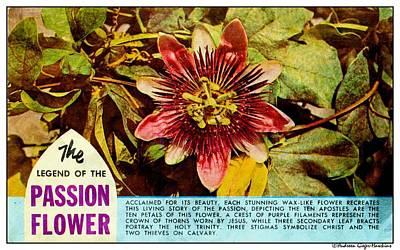 Photograph - The Legend Of The Passion Flower by Audreen Gieger