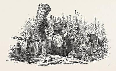 Grapes Drawing - The Liebfrau Vintage by English School