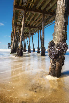 The Life Of A Barnacle Art Print by Ryan Manuel