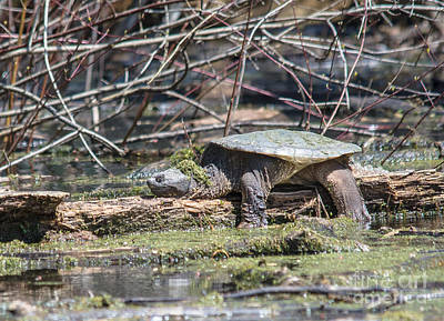 Photograph - The Life Of A Snapper by Cheryl Baxter