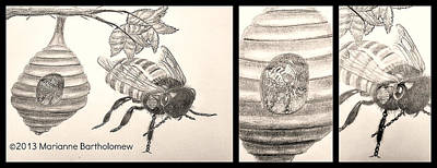 The Life Of The Bee Art Print by Marianne Bartholomew
