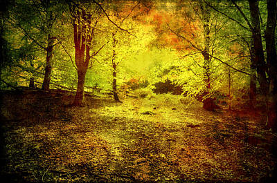 Photograph - The Light In The Forest by Henrik Petersen