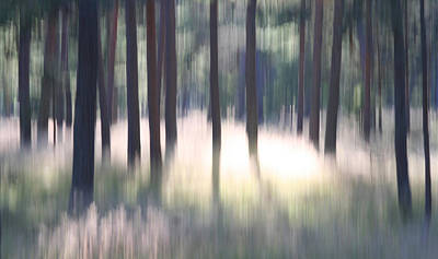 Photograph - The Light Of The Forest by Dreamland Media