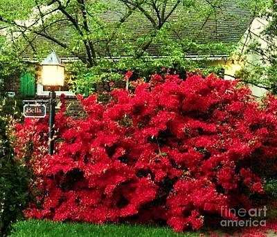 Art Print featuring the photograph The Light Red Bush Bella by Becky Lupe