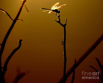Photograph - The Light Of Flight Upon The Mosquito Hawk At Mississipi River In New Orleans Louisiana by Michael Hoard