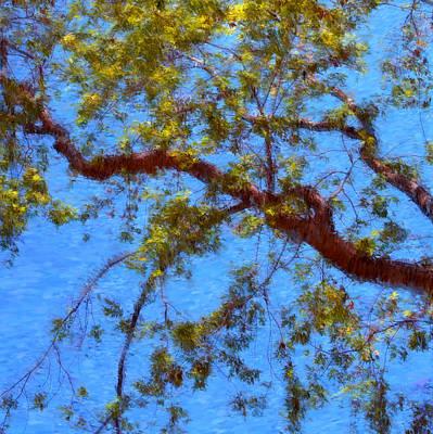 Photograph - The Lilac Tree by Joann Vitali