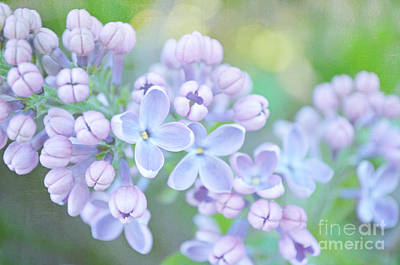 Photograph - The Lilacs by Tara Turner