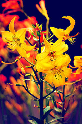 The Lilium Garden - Yellow Whoppers Original by Li   van Saathoff