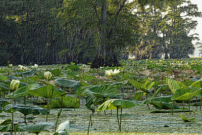 Photograph - The Lily Pond by Nadalyn Larsen