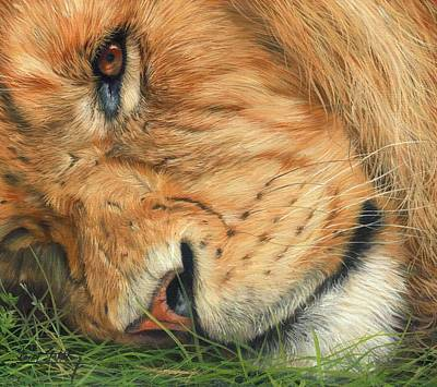 The Lion Sleeps Art Print by David Stribbling