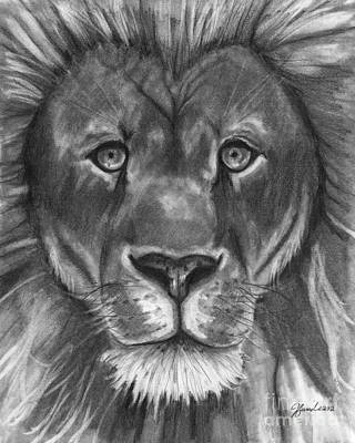 Drawing - The Lion's Stare by J Ferwerda