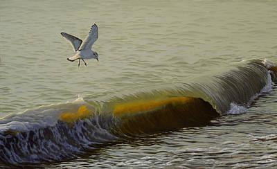 The Little Gull Art Print