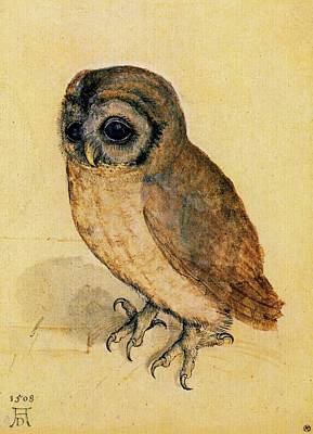 The Little Owl Art Print by Albrecht Durer