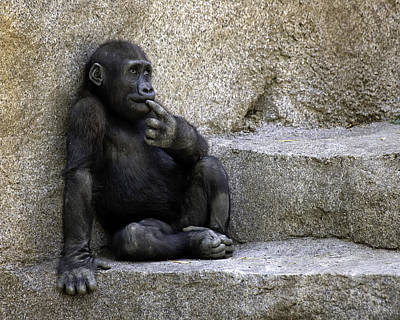 Photograph - The Little Thinker by Gary Neiss