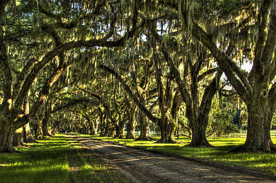 Photograph - Tomotley Plantation Live Oaks  by Reid Callaway