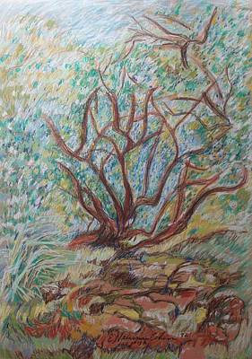 Drawing - The Living Bush by Esther Newman-Cohen