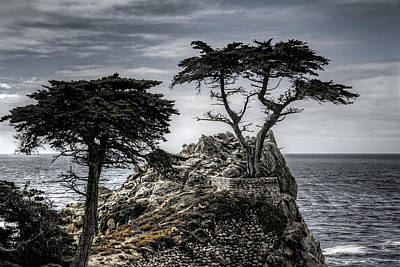 Photograph - The Lone Cypress by Eduard Moldoveanu