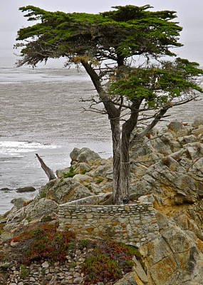 Photograph - The Lone Cypress Of Pebble Beach by Kirsten Giving