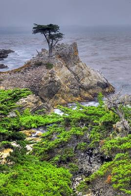 Photograph - The Lone Cypress by Willie Harper
