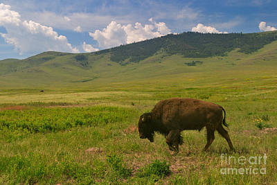 Photograph - The Lone Grazer by Charles Kozierok