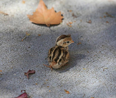 Baby Bird Photograph - The Lone Survivor by Donna Kennedy
