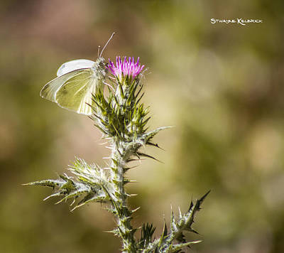 Photograph - The Lonely Butterfly by Stwayne Keubrick