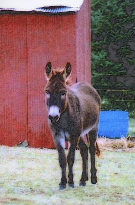 Photograph - The Lonely Donkey by Kay Novy