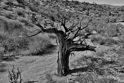 Photograph - The Lonely Mojave by Long Love Photography