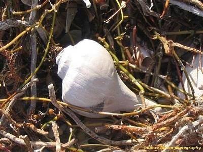 Photograph - The Lonely Seashell by Nance Larson